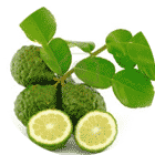 colon thee Lime Leaf & Extract